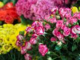 Иза, салон цветов